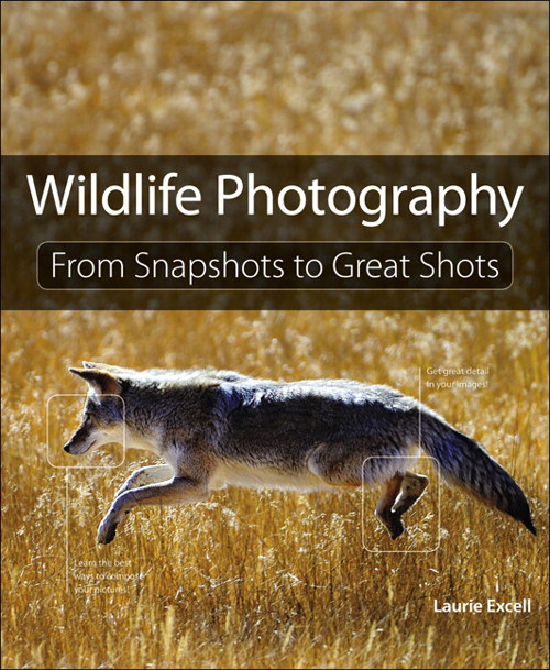 Wildlife Photography: From Snapshots to Great Shots